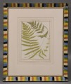 Pair Framed Fern Engravings by Heath