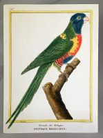 Martinet Copper Plate Engraving of a Parrot